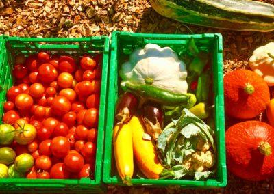 verduras 4